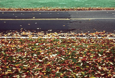 Road In Autumn Poster