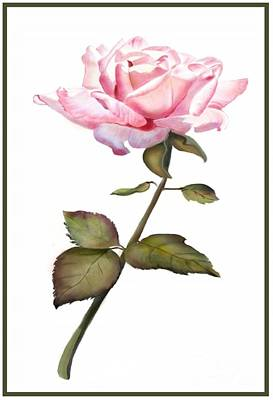 A Rose For You Poster by Joan A Hamilton