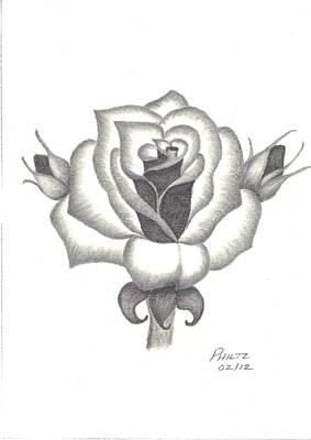 Poster featuring the drawing A Rose  by Patricia Hiltz