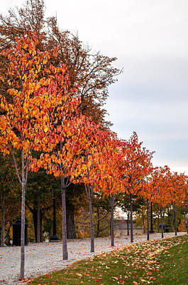 A Row Of Autumn Trees Poster