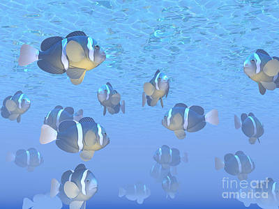 A School Of Clownfish Swimming Poster