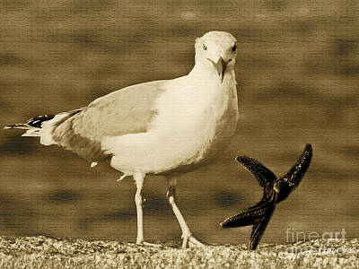 A Seagull Kind Of Day Poster by Carol F Austin