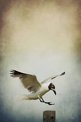 A Seagull's Landing Poster by Trish Mistric