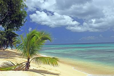 A Secluded Beach In Barbados Poster by Willie Harper