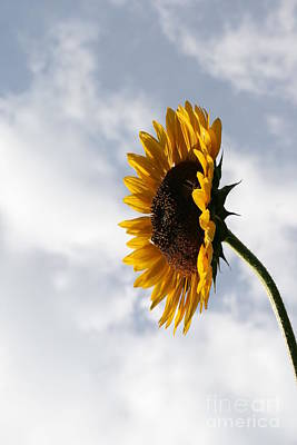 A Side Of Sunflower Poster by Neal Eslinger