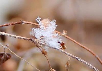 A Single Snowflake Poster