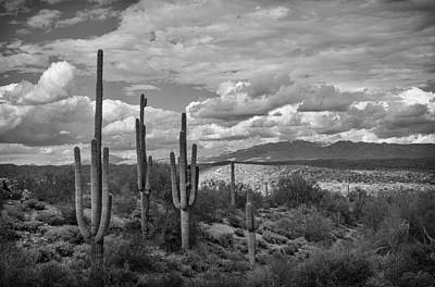A Sonoran Winter Day In Black And White  Poster