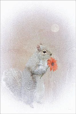 A Squirrel In Love Poster by Tom York Images
