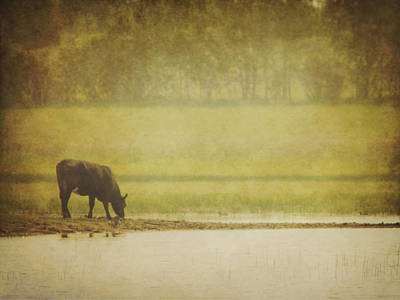 A Steer At A Pond Having A Drink In Red Poster
