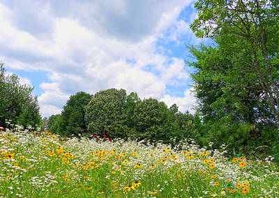 Poster featuring the photograph A Summer Meadow by Jim Whalen
