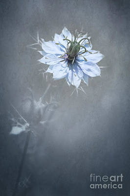 a Touch of Blue Poster by Svetlana Sewell