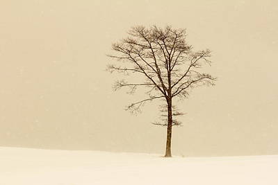 A Tree On A Hill In A Snow Storm Poster