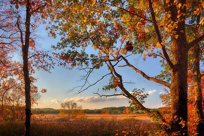 A Trees View Of Autumn On The Marsh Poster by Sylvia J Zarco
