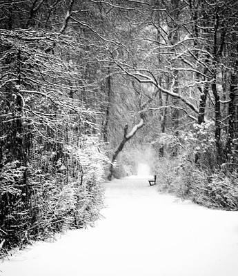 A Walk In The Winter Woods Poster by Vicki Jauron