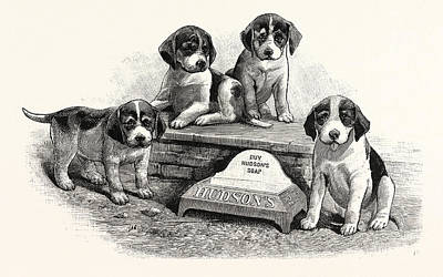 A Water Trough For Dogs To Drink Poster