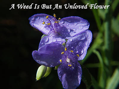 A Weed Is But An Unloved Flower Poster