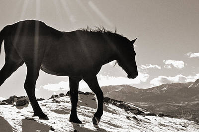 Poster featuring the photograph A Wild Horse In The Mountains by Lula Adams