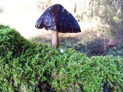 A Winter Mushroom Poster
