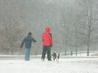 Poster featuring the photograph A Winter Walk In The Park - Silver Spring Md by Emmy Marie Vickers