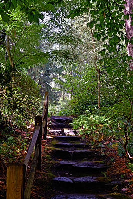 Poster featuring the photograph A Wooded Path by Anthony Baatz