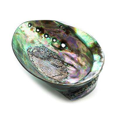 Abalone Shell Poster by Science Photo Library
