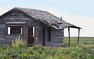 Abandoned Shack In Cotton Field Poster