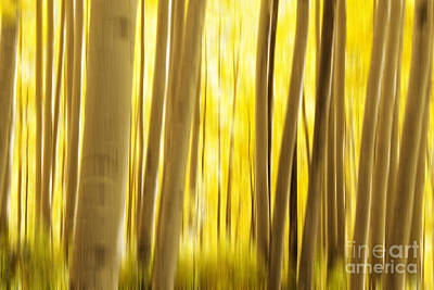 Abstract Aspens Poster by Juli Scalzi