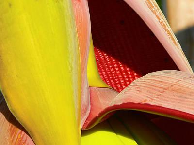 Abstract Banana Bloom Poster