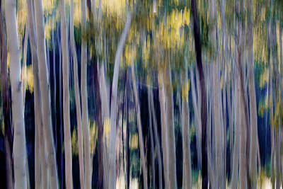 Abstract Of Aspen Trees Poster by Ben Horton