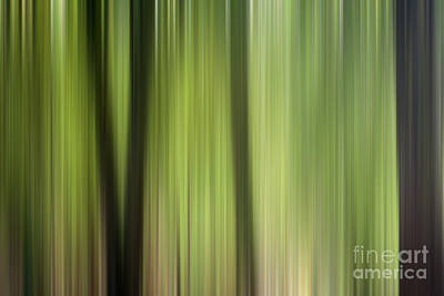 Abstract Trees In The Forest Poster by Natalie Kinnear