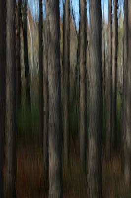 Poster featuring the photograph Abstract Woods by Randy Pollard