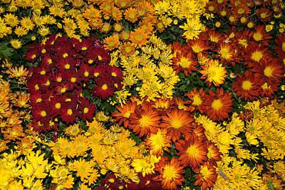 Abundance Of Yellows Reds And Oranges Poster by Georgia Mizuleva