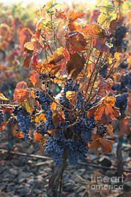 Abundant Harvest Poster by Carol Groenen