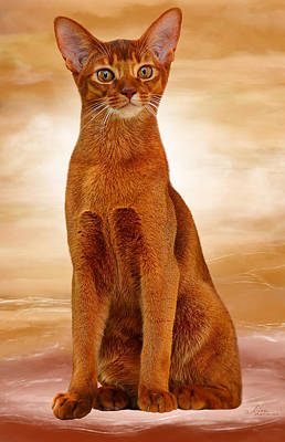 Abyssinian Cat Sorrel Color Poster