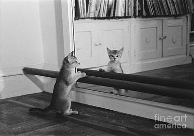 Abyssinian Kitten In Dance Studio Poster by Joan Baron
