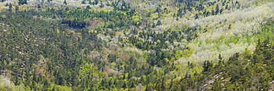 Acadia National Park - Mont Desert Island - Spring Forest - Maine Poster by Keith Webber Jr