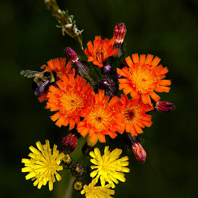 Adirondack Flowers Poster by David Patterson