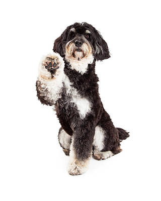 Adorable Poodle Mix Breed Dog Extending Paw Poster