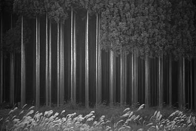 Afforestation Poster