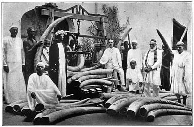 Africa Ivory Trade, C1900 Poster