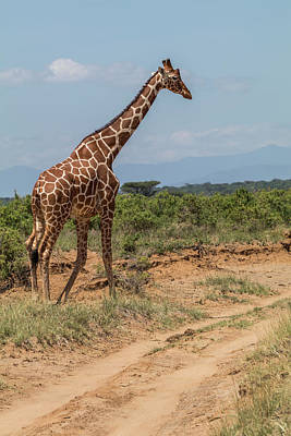 Africa, Kenya, Samburu National Park Poster