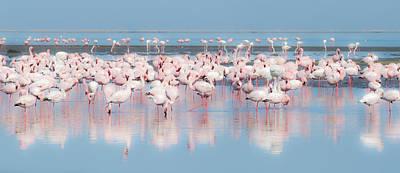 Africa, Namibia, Walvis Bay Poster