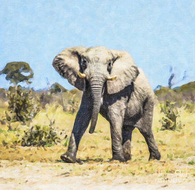 African Elephant Bull Mock Charging Poster