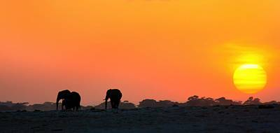 Poster featuring the photograph African Elephant Sunset by Amanda Stadther
