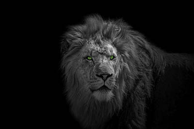 Poster featuring the photograph African Lion by Peter Lakomy