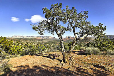 Poster featuring the photograph Afternoon Light In Sedona Arizona by James Steele
