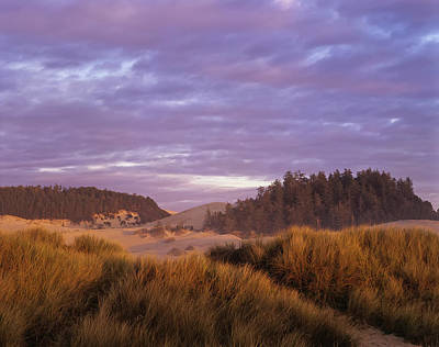 Afternoon Light Warms The Umpqua Dunes Poster by Robert L. Potts