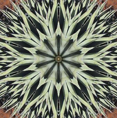 Poster featuring the digital art Agave Star by Trina Stephenson