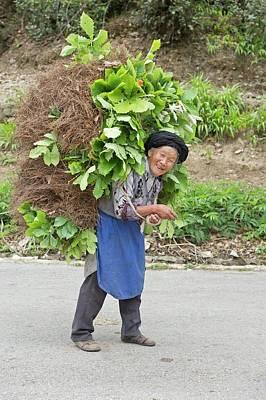 Aged Female Tibetan Subsistence Farmer Poster by Tony Camacho