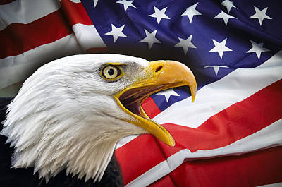 Aggressive Eagle And United States Flag Poster by Daniel Hagerman